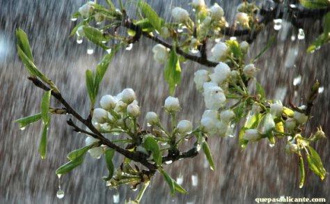 wiosna Polska