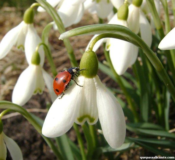 wiosnaAlcoy1