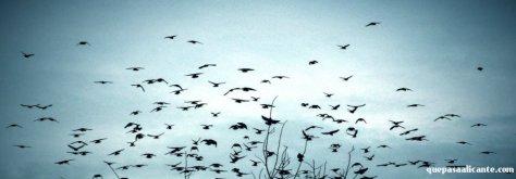 Ptakiodlatuja_AsiaZie